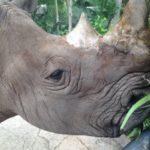 バンコクから行けるシラチャのカオキアオ動物園=タイ移住FP
